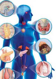 эндокринология 1